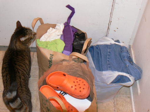 Weasle inspects the donations for Wednesday and Friday.